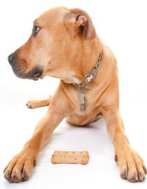 bigstock-dog-profile-by-bone-treat-25727306