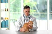 Veterinarian doctor with cat at a vet clinic
